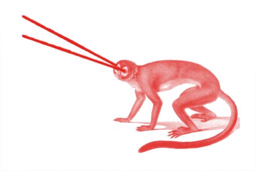 czerwona-malpka